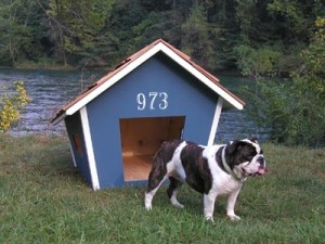 White number decal on dog house